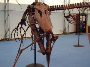 Dinosaur Jubilee Random Dinosaur Skeleton