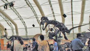 Dinosaur Jubilee Carnival Skeletons