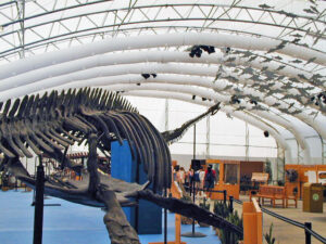 Dinosaur Jubilee Dinosaur Skeleton